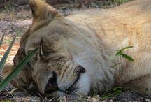 Wild world / Animals, children of earth, wild & wonderful creatures ...