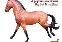"Loughnatousa Fabio Copperfox Model Horse / Images of ""Loughnatousa Fabio"", our bay Irish Sports Horse who is part of our 2016 Copperfox range of model horses."