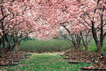 Spring / by Mindy Nutter (Amanda Holtorf Nutter)