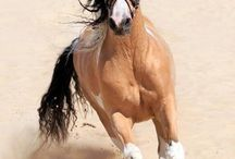 Horses / My love and dream♡