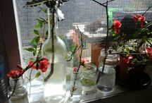 Mon jardin expérimental