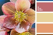 Color schemes / For illustration inspiration