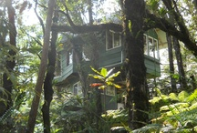 Our Treehouse / A manifestation of impeccable visions for a better Hawaii Island.   Built by great friends out of mostly recycled materials the treehouse has been an epic adventure. A sustainable place to stay in a remote, untouched, native ohia forest.  We love this. Come visit.