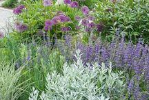 Tuin Kleinsee (garden)green purple & silver