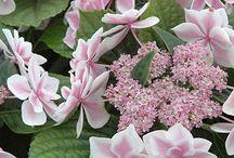 Beautiful flowers/plants