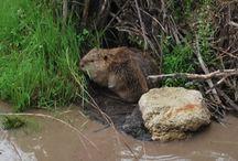 Jemez Wildlife / Area Wildlife