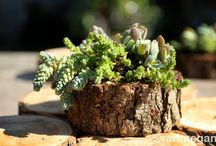 Plantas / Todas mis plantas y ....