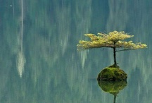 Trees / Photography of beautiful trees from all around the globe. / by Patrick Jobst