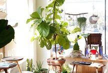 HOME   interior plants