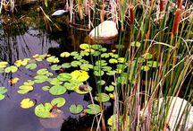 Eco- Ponds