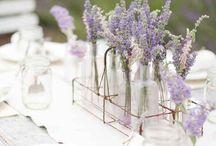 PANTONE - Lavender herb