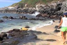 Turtle flips on Ho'okipa Beach, Maui.