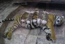 So cute!/ Funny / by Brooke Davies-Gillon