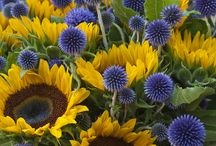 Gardens: Planting Combinations