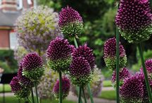 Gardens / Ideas for my garden / by Melanie