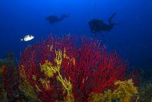 Kırmızı Mercanlar
