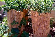 Edible Garden Growing Tips (Fruits and Veggies)