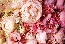 f l o w e r s / by Summer Blossom