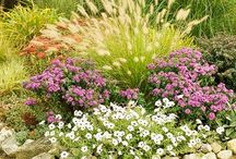 Gardening / Gardening tips and ideas to help you make your space an Eden