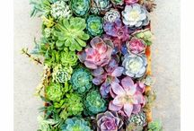 Succulents / Succulent wall frame
