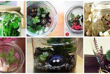 Terrarium Graden / terrarium garden - good garden idea for winter :)