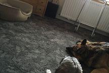 Intelligent canines