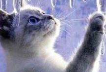 """Animals / """"No me importa saber si un animal puede razonar. Sólo sé que es capaz de sufrir y por ello lo considero mi prójimo"""" - Albert Schweitzer"""