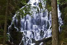 Oregon / by Denia Kirk