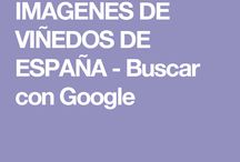 IMAGENES DE VIÑEDOS DE ESPAÑA