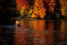 Fall / by dave swenson