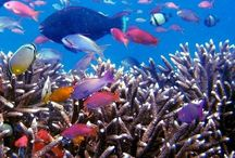 http://www.komodoecotour.com/komodo-diving-cruise-5h-4m