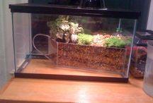 Turtle aquarium