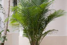 rośliny ❤