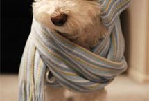 Doggie life