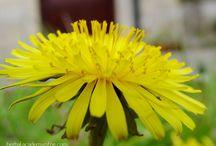 Materia Medica / Herbal healing