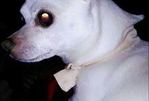 мой пес Мишель
