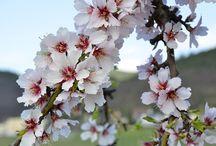 Frühjahr in der Pfalz