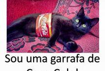 não sou um gato sou uma coca-cola mesmo!!!