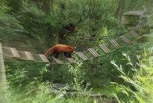 Biotropica / #Biotropica est une Serre Zoologique qui est situé à #Val de Reuil. Vous pourrez la visiter en famille et entre amis, voir et apprécier les animaux Tropicaux. Il se trouve à 2kms des #Gîtes du Manoir Saint-Ouen à #Léry.
