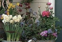 Αγαπημένη κηπουρική