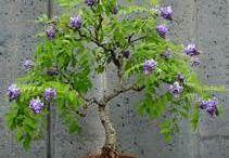 bonsaje a sukulenty