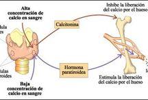 fisiología- nutrición