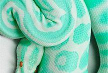 Serpents de Couleurs