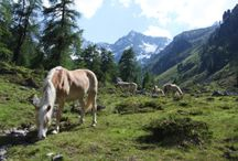 Wandern im Pitztal / by Pitztal Tirol