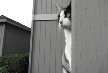 Meow / by Annmarie Gabrian