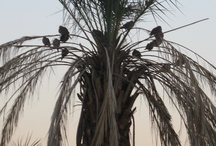 Southern California / I love palm trees! / by visual chick