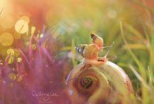 Insektenschönheiten!