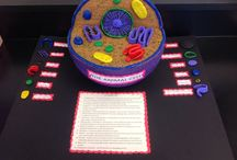 animal cell project