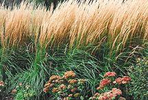 Berensweig / by Katie Brown Landscape Design
