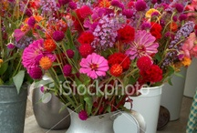 Gardening/Flowers / by Marilyn Wilhelm